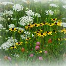 Wild Flowers by katpix