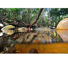 Above and below Daintree Photographic Print