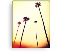 Catalina Island Palms I Canvas Print