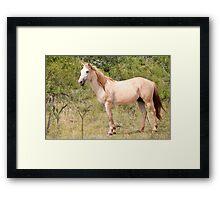 Bush Horse   Framed Print