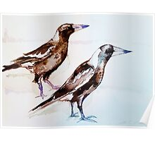 Magpies (Cracticus Tibicen) by Liz H Lovell  Poster