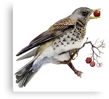 Fieldfare thrush Canvas Print