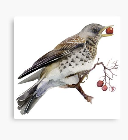 Fieldfare thrush Metal Print