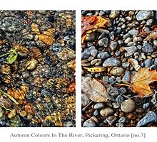 Autumn Colours In The River, Pickering, Ontario [no.7] by Solomon Walker