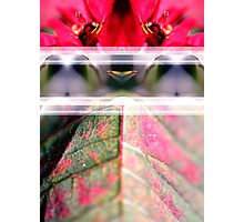 Natural Symmetry Photographic Print