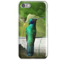 Sparkling Violetear Hummingbird on a Wire iPhone Case/Skin