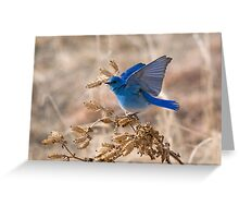 Bluebird with lifted wings Greeting Card