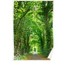 Tunnel of Trees Poster