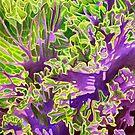 Ornamental kale by joeyartist