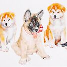 Akita Puppies by BarbBarcikKeith