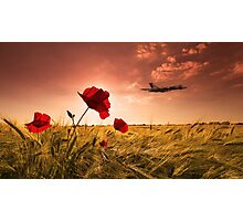 Vulcan Poppy Sunset Photographic Print