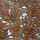 Picton River Bed by Jessica Fittock