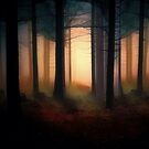 Forest Light by Shanina Conway