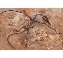Faux Dino Photographic Print