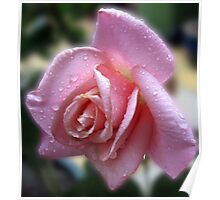 The Magic of Raindrops - Rose in the Rain Poster