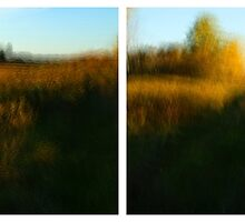 Autumn Landscape Colours - no.24 by Solomon Walker