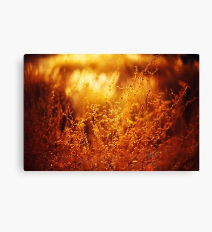 Nature Background with Golden Grass Canvas Print
