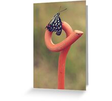 Black Butterfly with White and Orange Markings on Metal Pole Greeting Card