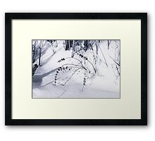 winter's fresh snow in forest Framed Print