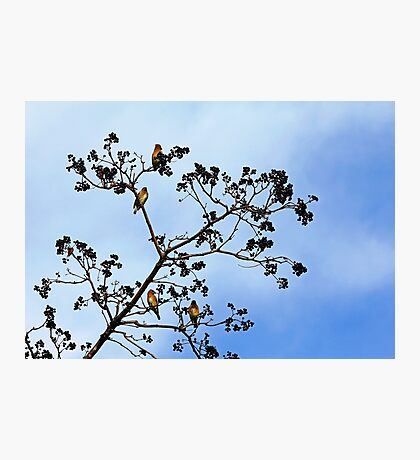 Waxwing Museum Photographic Print