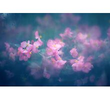 Abstract Nature Background with Pink Flowers Photographic Print