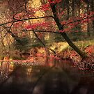 Dreamy Autumn Forest by Svetlana Sewell