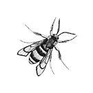 Bee by Aleksandra Kabakova