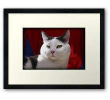The Lindy Look Framed Print