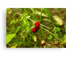 Last Fruits from the Wild Garden - Nature Photography Canvas Print