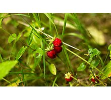Last Fruits from the Wild Garden - Nature Photography Photographic Print