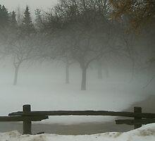 Fog.....  by Larry Llewellyn