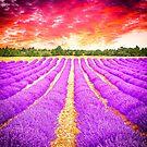 Lavender field by gianliguori