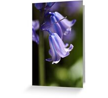 Bluebell Blues Greeting Card