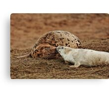 Grey seal mother and pup Canvas Print