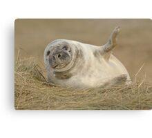 Grey Seal Pup Waves. Canvas Print