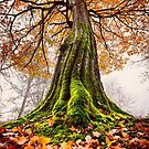 The Power of Roots by Svetlana Sewell