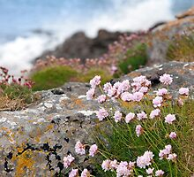 coastal pink wildflowers by morrbyte