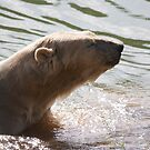 Clean Bear by Ray Clarke