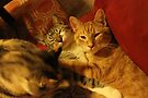. Untitled Fizgig, Sally, and Ludo by Margaret Bryant