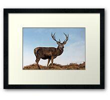 Red Deer Stag on a Hilltop Framed Print