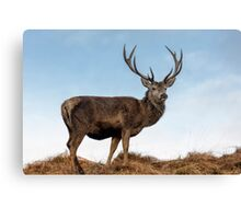 Red Deer Stag on a Hilltop Canvas Print