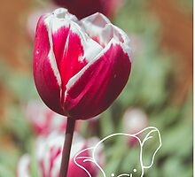 Tulips and Elephants by sgbphotos