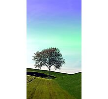 Lonely tree in the middle of nowhere | landscape photography Photographic Print
