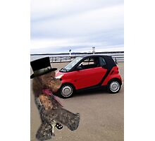 SMART BEARS DRIVE SMART CARS Photographic Print