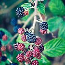 Ripening Blackberries by Vicki Field