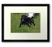 my dog jake waiting for his master to move Framed Print