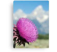 Tetons Thistle Canvas Print