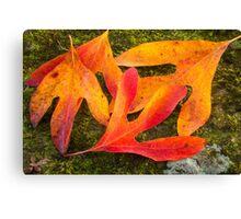 Colorful Fallen Leaves Canvas Print