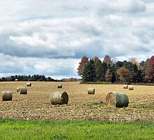 Ohio Bale-Out by Monnie Ryan