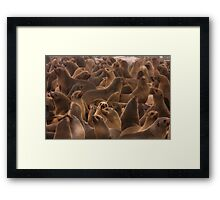 Surrounded by fur Framed Print